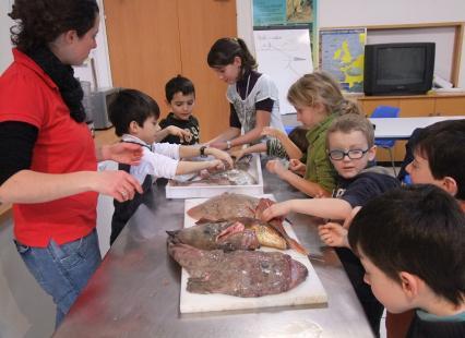 Atelier du Goût: Découverte des poissons