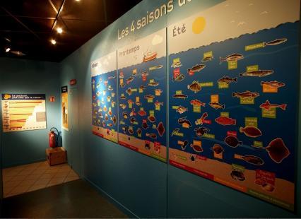 Classsification espèces de poisson par saison dans les expositions