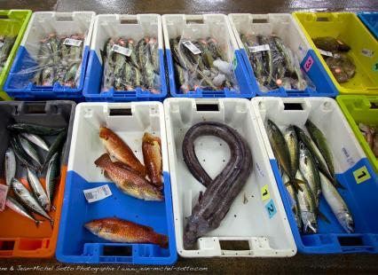 Journée Savourez la Pêche poissons Haliotika Guilvinec
