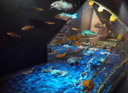 Chalut et ses espèces de poissons et crustacés