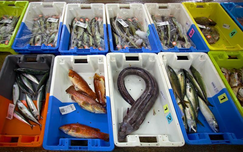 Caisses poisson criée haliotika Guilvinec